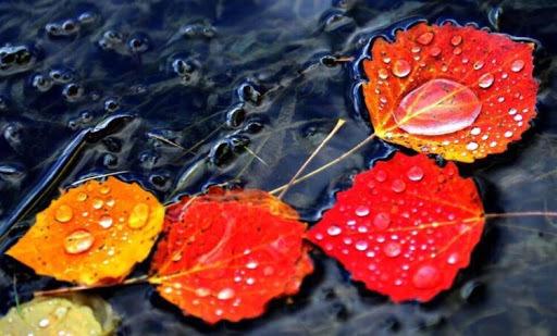 卷首語:今秋,膜拜一陣漩渦捲起的相信