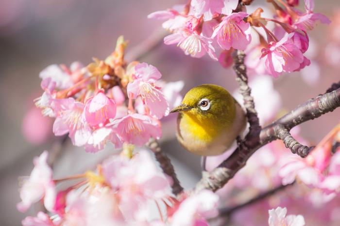 卷首語:春天將在優美的文字中永駐
